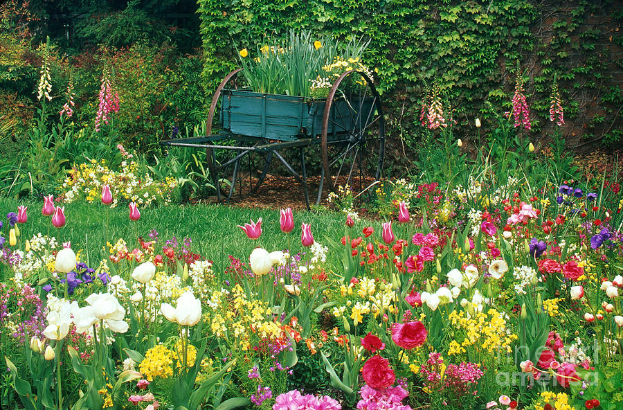 Flower Garden And Wagon Photograph