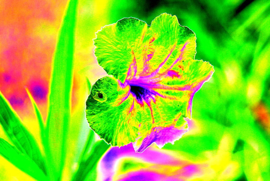 Flower Power Digital Art  - Flower Power Fine Art Print