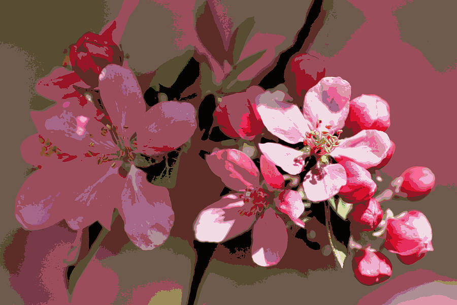 Flowering Crabapple Posterized Photograph  - Flowering Crabapple Posterized Fine Art Print