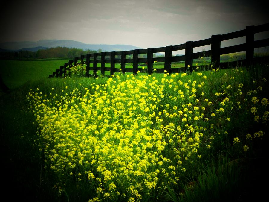 Flowers Along The Fence Photograph  - Flowers Along The Fence Fine Art Print