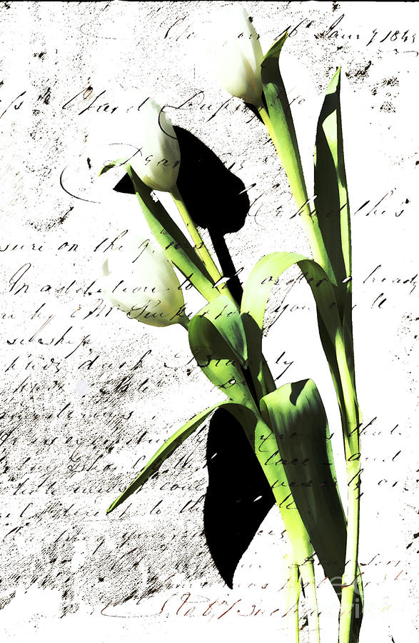 Flowers And Love Letters Photograph