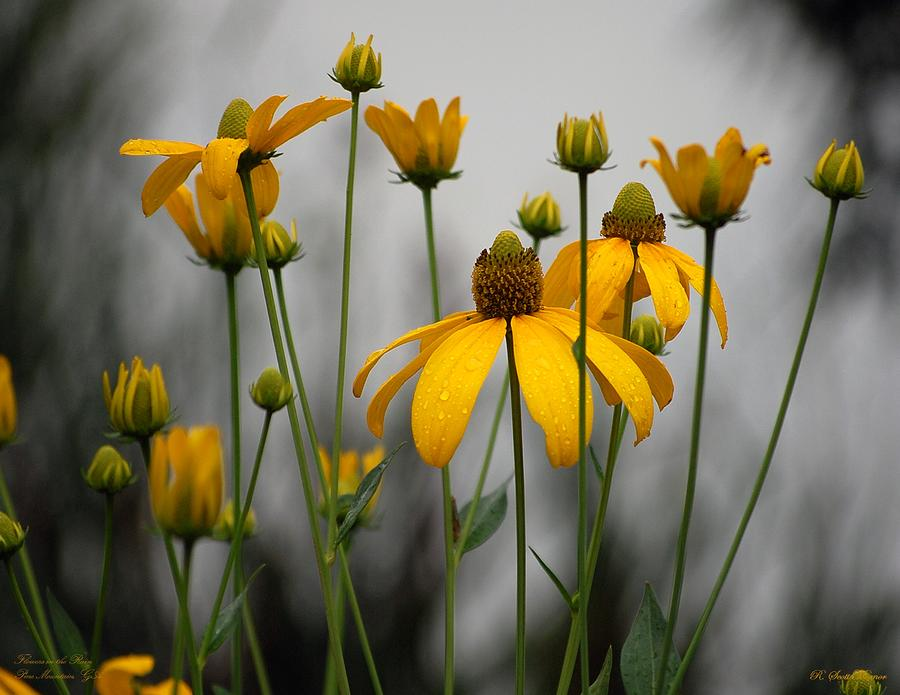 Flowers In The Rain Photograph  - Flowers In The Rain Fine Art Print