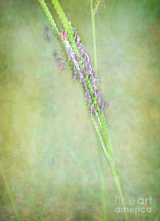 Flowers Of The Grass Photograph  - Flowers Of The Grass Fine Art Print