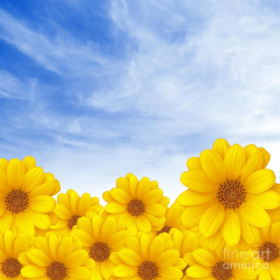 Flowers Over Sky Photograph