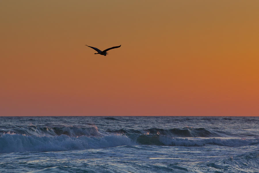 Beach Photograph - Fly By by Charles Warren