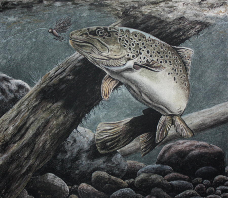 Fly Fishing Drawing  - Fly Fishing Fine Art Print