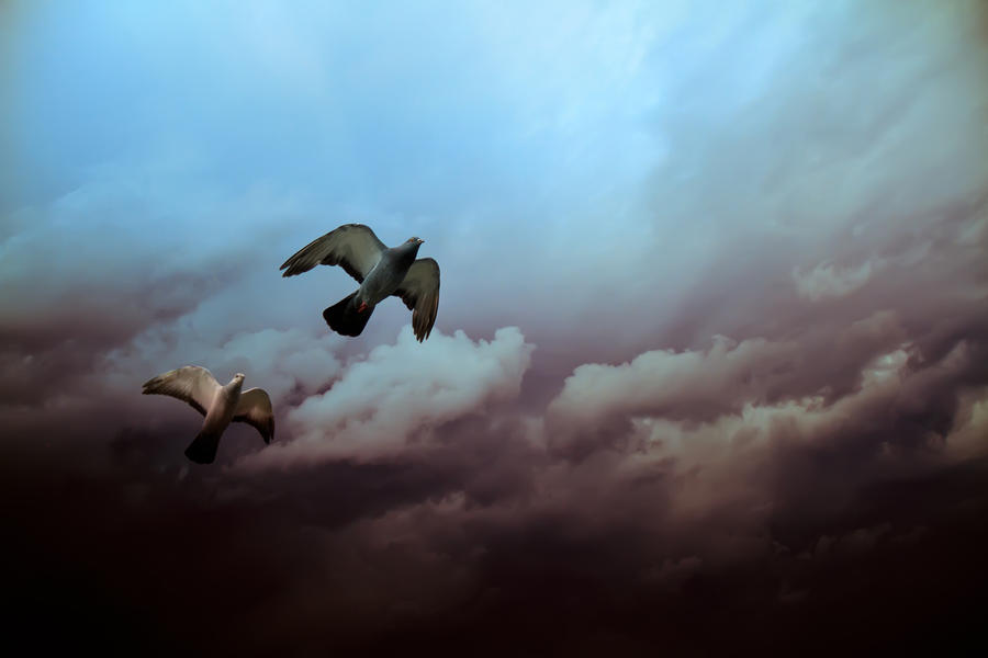 Flying Before The Storm Photograph