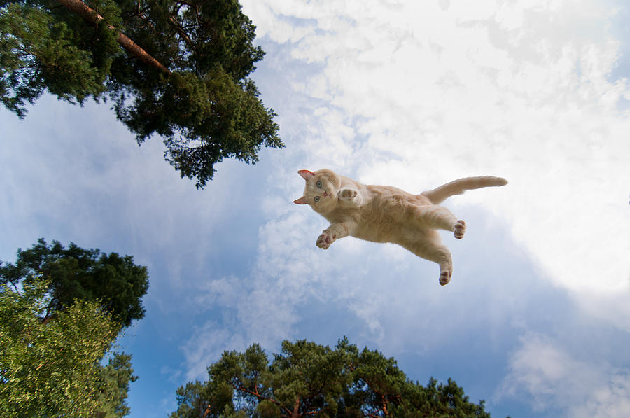 Flying Cat Photograph - Flying Cat by Micael  Carlsson