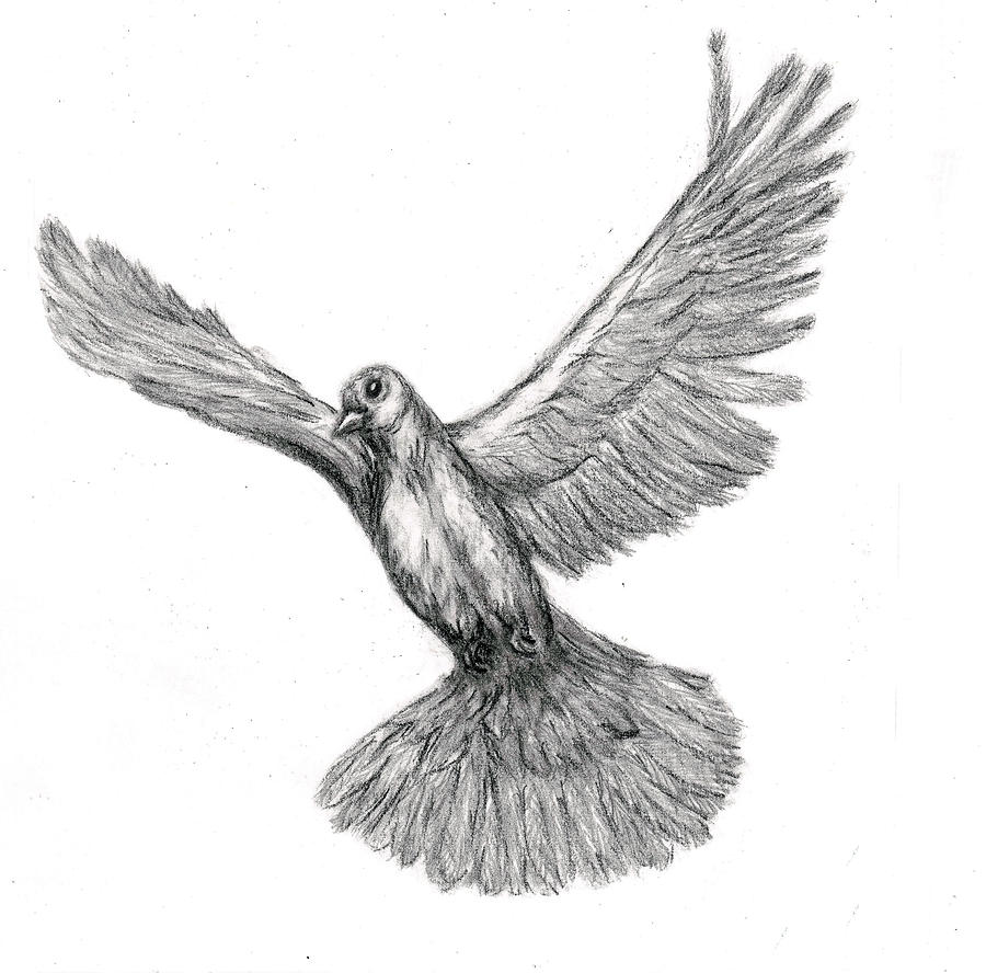 Flying Dove Drawing  - Flying Dove Fine Art Print