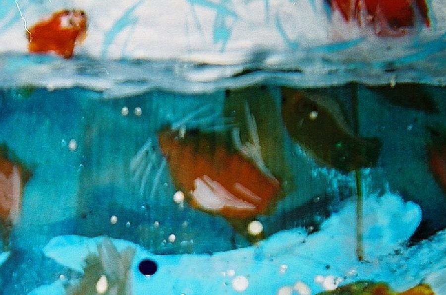 flying fish by cacodaemonia - photo #39