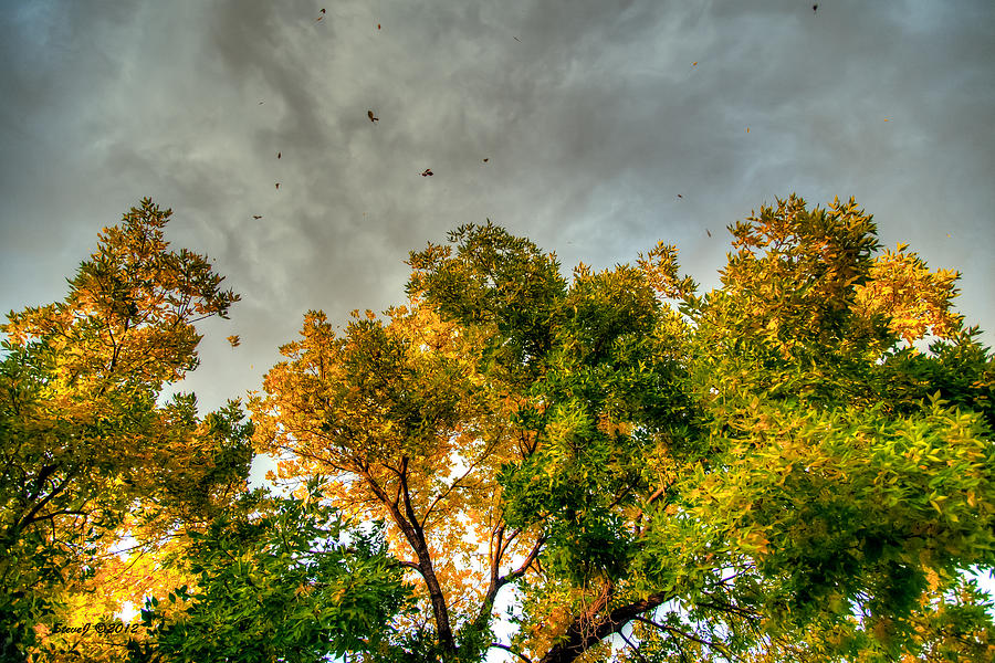 Flying Leaves Photograph