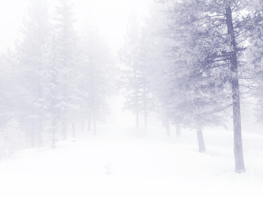 Fog And Snow Photograph