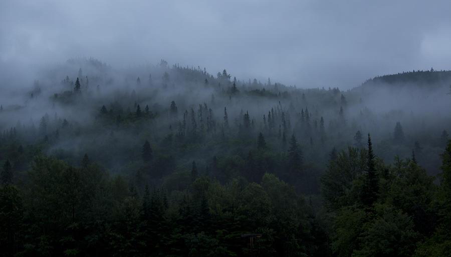 Free stock photo of fog, foggy, green