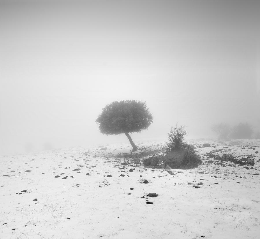 Fog Tree Photograph  - Fog Tree Fine Art Print