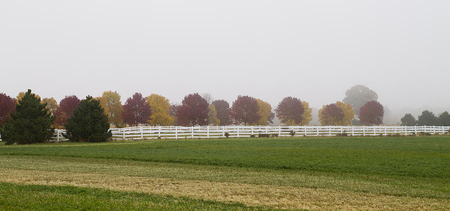 Foggy Fall Photograph