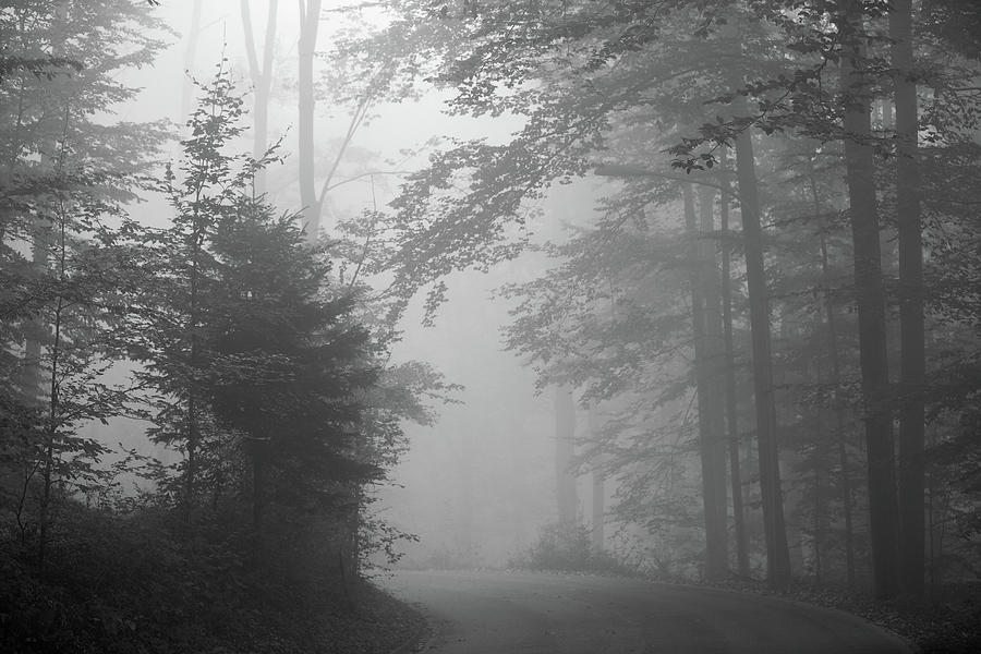 Foggy Forest Photograph  - Foggy Forest Fine Art Print