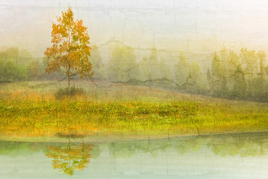 Foggy Meadow Photograph