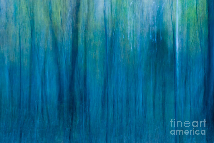 Foggy Morning Blues Photograph  - Foggy Morning Blues Fine Art Print