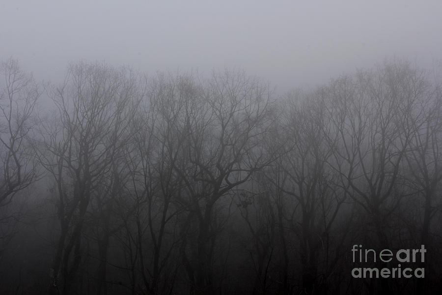 Foggy Treeline Photograph