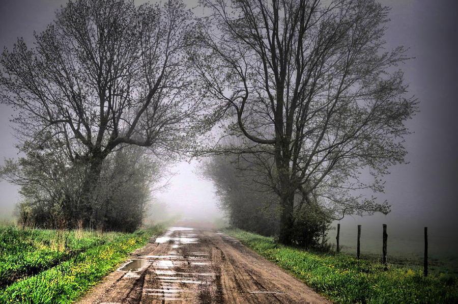 Follow The Fog Photograph