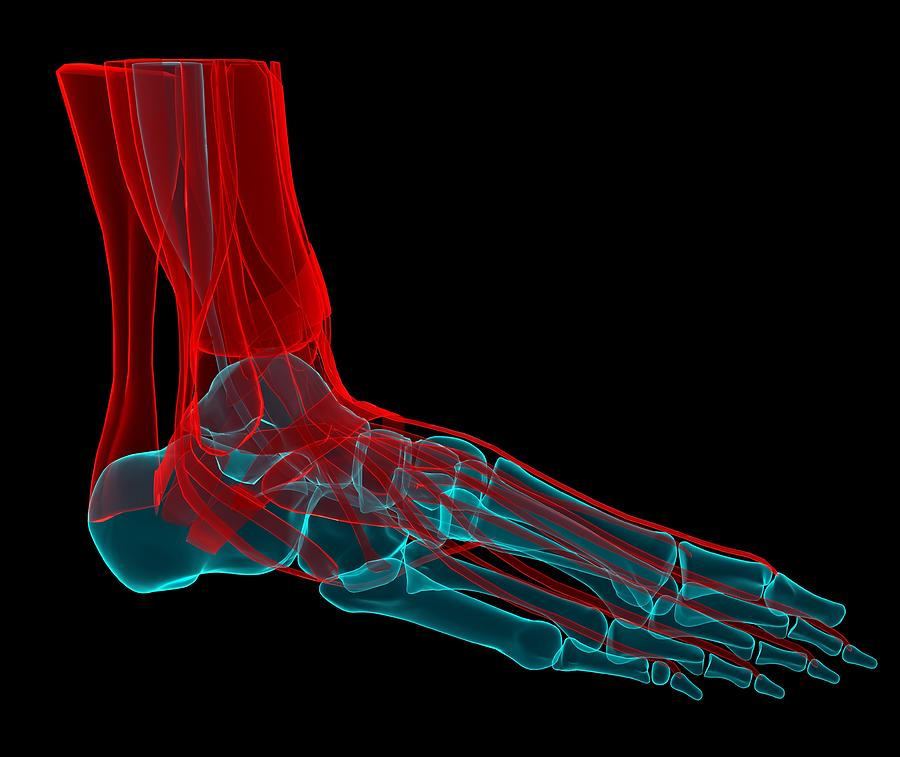 Horizontal Digital Art - Foot Anatomy, Artwork by Andrzej Wojcicki