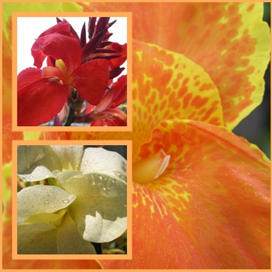 For The Love Of A Canna Photograph  - For The Love Of A Canna Fine Art Print
