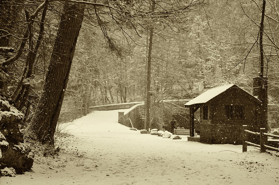 Forbidden Drive In Winter Photograph  - Forbidden Drive In Winter Fine Art Print