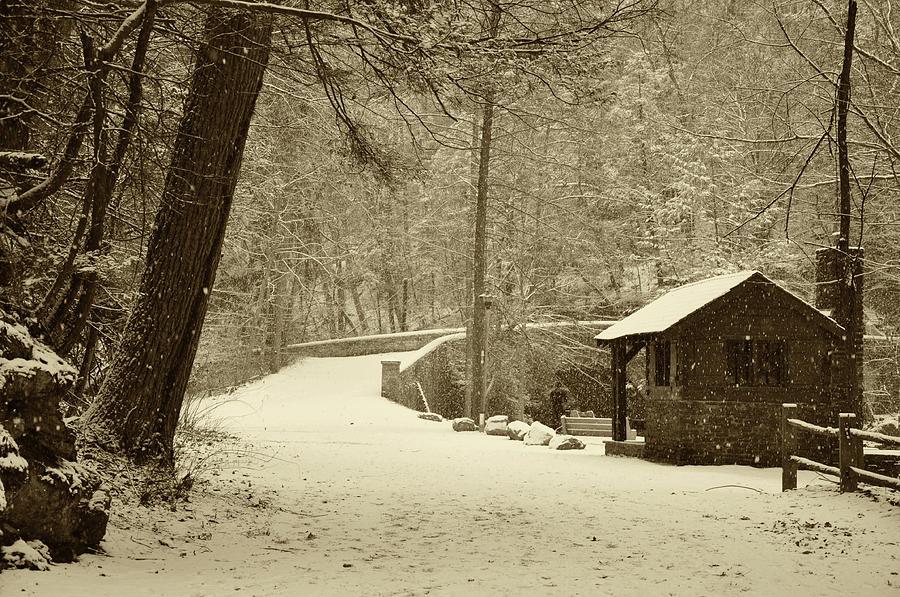 Forbidden Drive In Winter Photograph