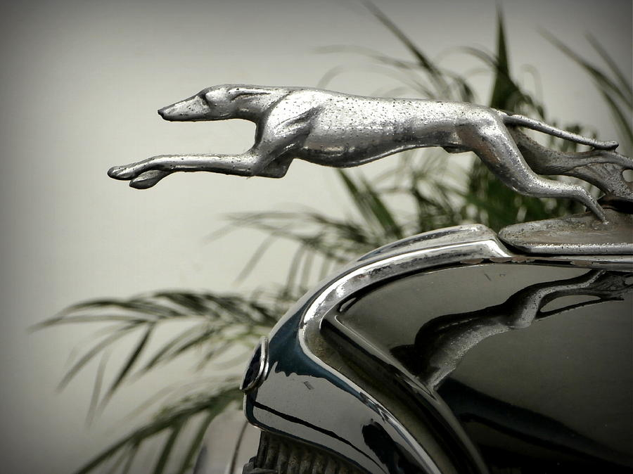 Greyhound Photograph - Ford Greyhound Radiator Cap by Karyn Robinson