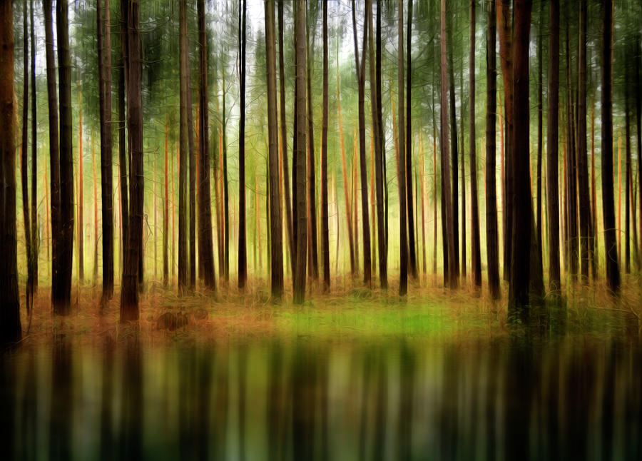 Forest Abstract Photograph  - Forest Abstract Fine Art Print