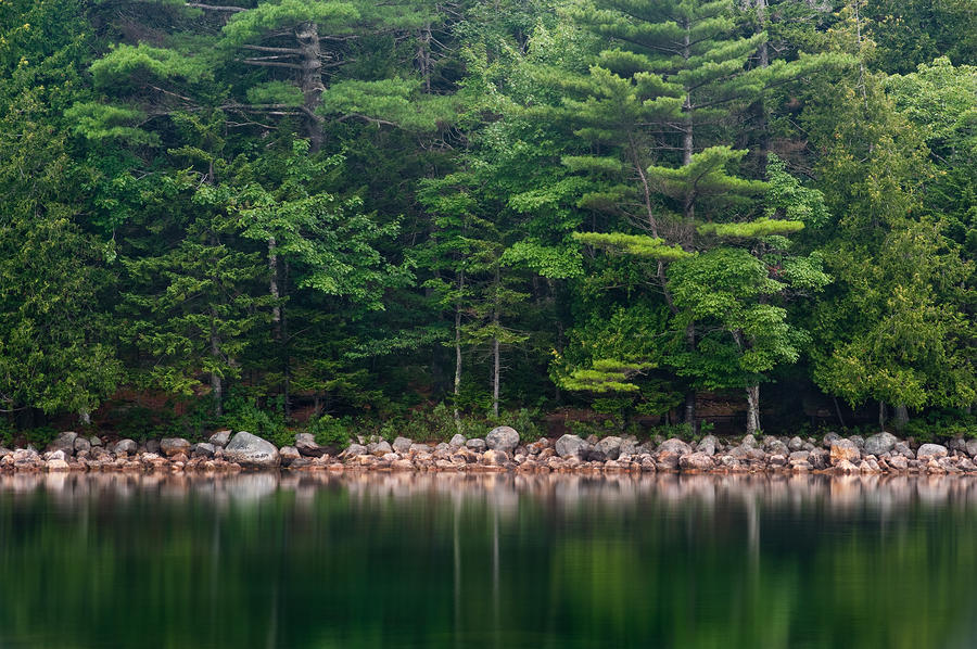 Forest At Jordan Pond Acadia Photograph