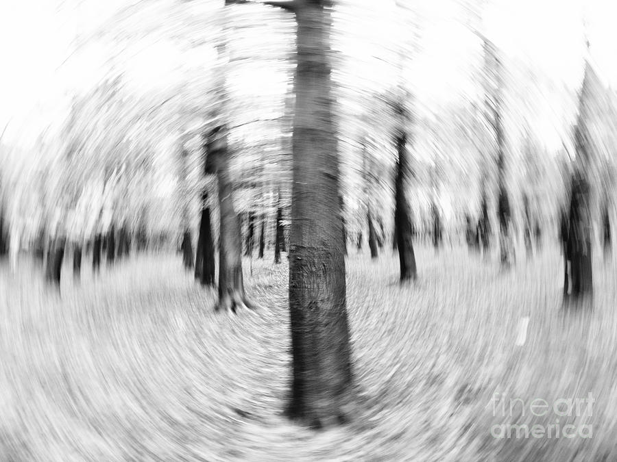 Forest For The Trees - Black And White Nature Photograph Photograph
