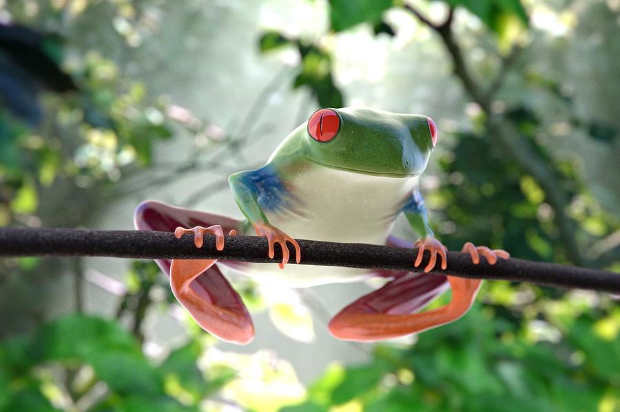 Frog Canvas Print Framed Print Art Print Acrylic Print Greeting Print Greeting Forest Frog  Photograph - Forest Frog by Ilendra Vyas