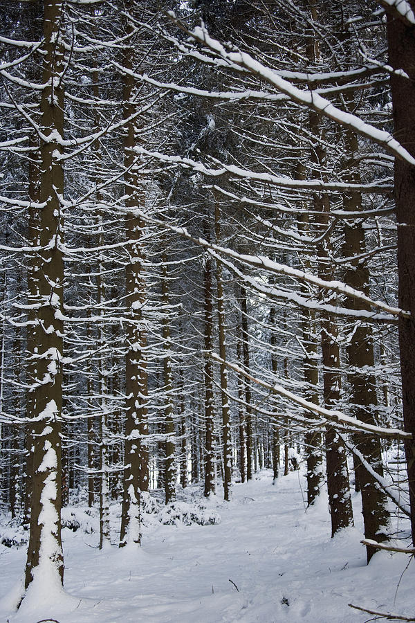 Forest Of Marburg In Winter Photograph  - Forest Of Marburg In Winter Fine Art Print