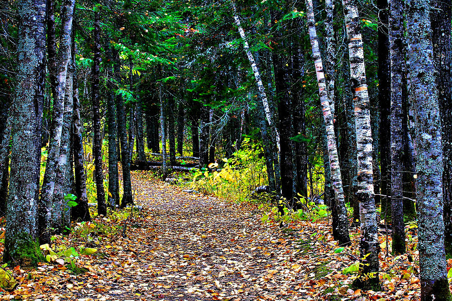Forest Photograph - Forest Path In Autumn by Matthew Winn