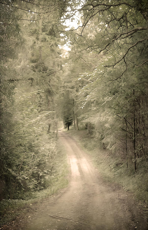 Forest Path Photograph  - Forest Path Fine Art Print