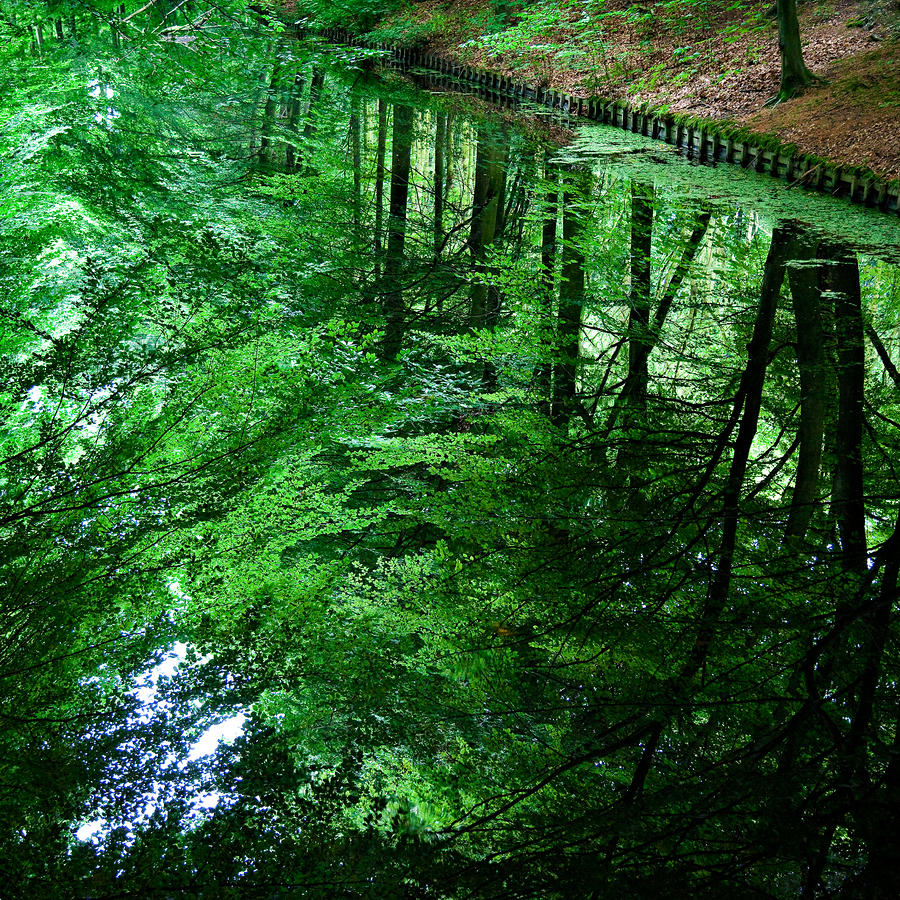 Forest Reflection Photograph  - Forest Reflection Fine Art Print