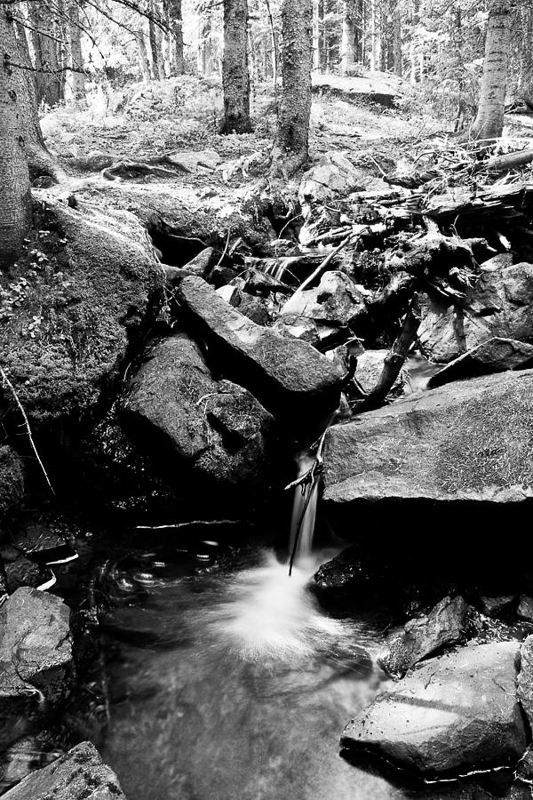 Forest Stream In Black And White Photograph