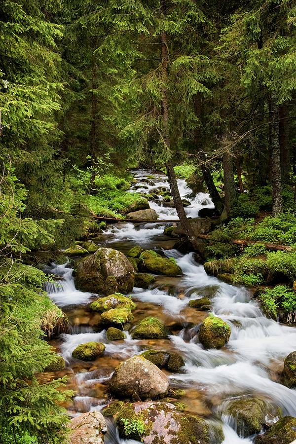 Beautiful Photograph - Forest Stream In Tatra Mountains by Artur Bogacki