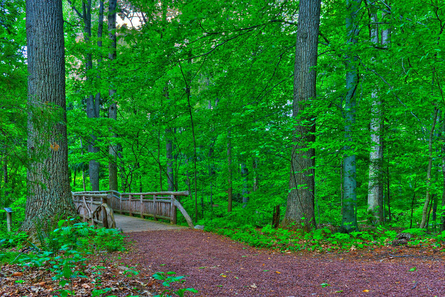 Forest Walk Photograph  - Forest Walk Fine Art Print