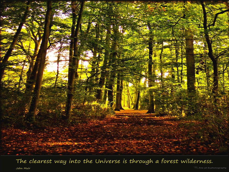 Forest Photograph - Forest Wilderness by Yvon van der Wijk