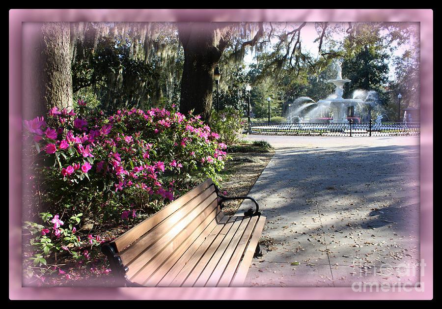 Forsyth Park In Spring Pink Photograph