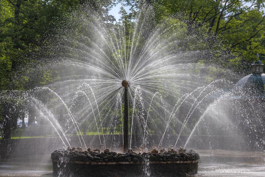 Fountain  Peterhof Palace  St Petersburg   Russia Photograph