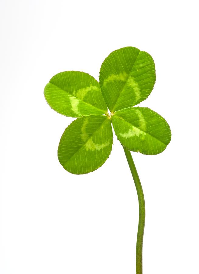Four-leaf Clover Photograph  - Four-leaf Clover Fine Art Print