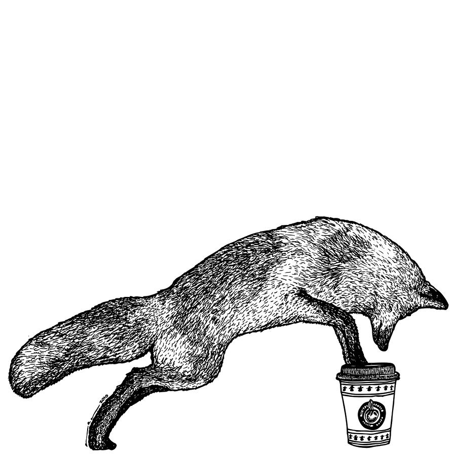 Fox Drinking Coffee Drawing  - Fox Drinking Coffee Fine Art Print