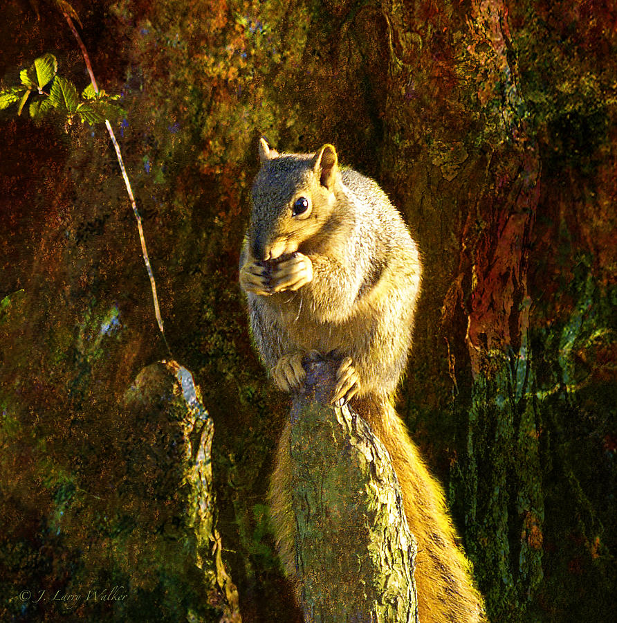Fox Squirrel Sitting On Cypress Knee Digital Art  - Fox Squirrel Sitting On Cypress Knee Fine Art Print
