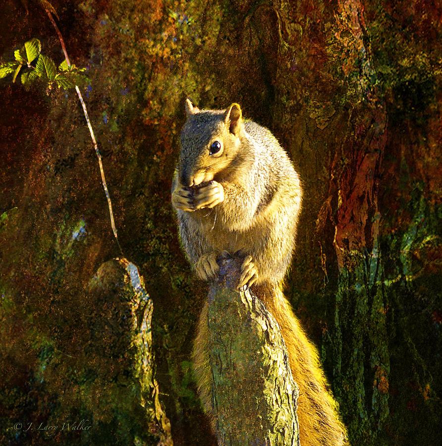J Larry Walker Digital Art - Fox Squirrel Sitting On Cypress Knee by J Larry Walker