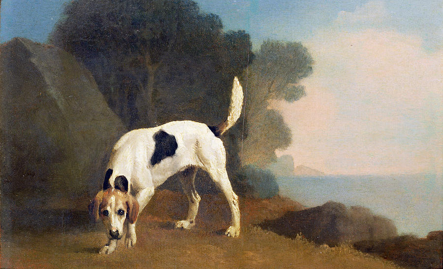 Foxhound On The Scent Photograph