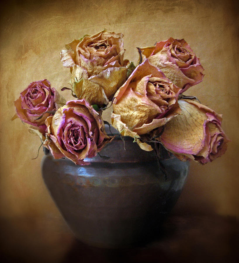 Fragile Rose Photograph  - Fragile Rose Fine Art Print