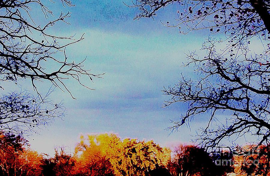 Framed Fall Trees Photograph